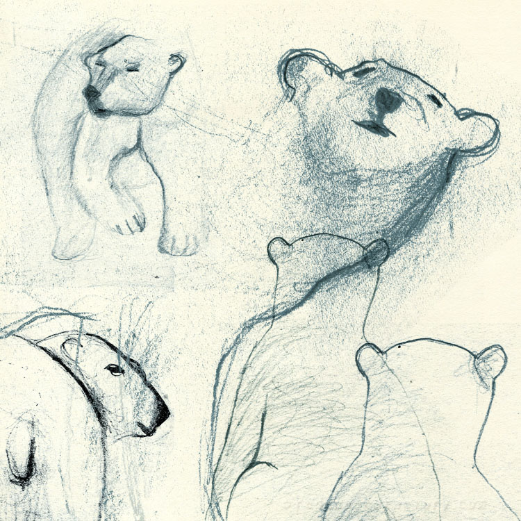 Polar Bear studies from mu sketchbook