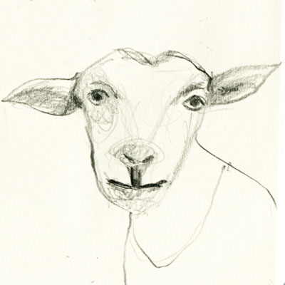 Pencil drawing from my sketchbook of a animals and emotion - goats